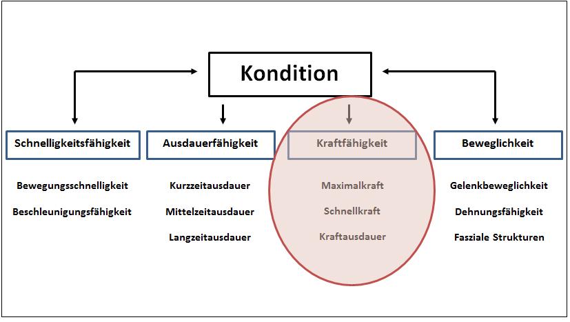 Grafik Kondition_kraftfokus